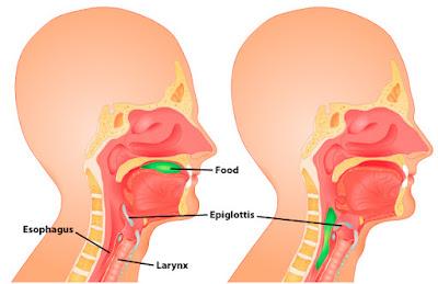 mulut, faring, dan esofagus