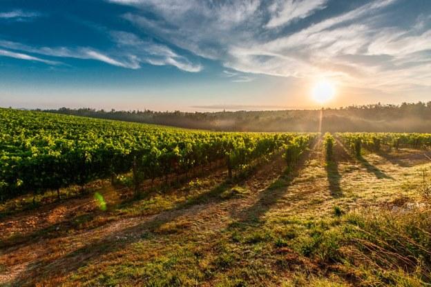 Viaje gastronómico por Castilla-La Mancha a través de algunas de sus Denominaciones de Origen