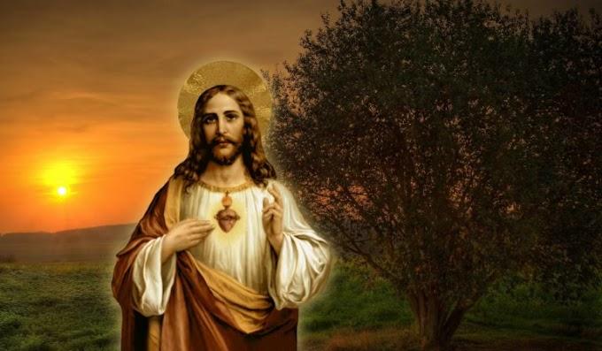 Jesus veio para o que era seu, mas os seus não o receberam