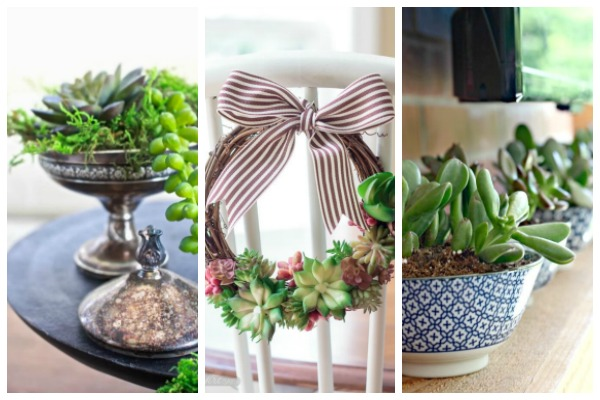 decorate with succulents
