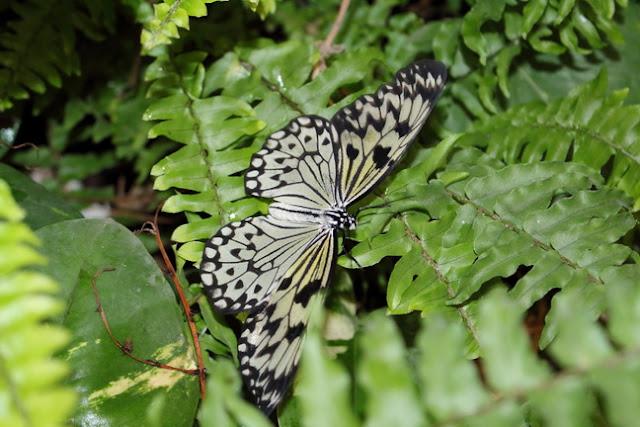 farfalle e homeschooling o educazione parentale