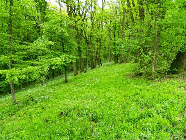 zelenilo-u-prirodi-lepe-sume