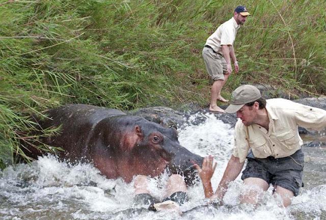 Geoff's blogs: Beware of Hippopotamus