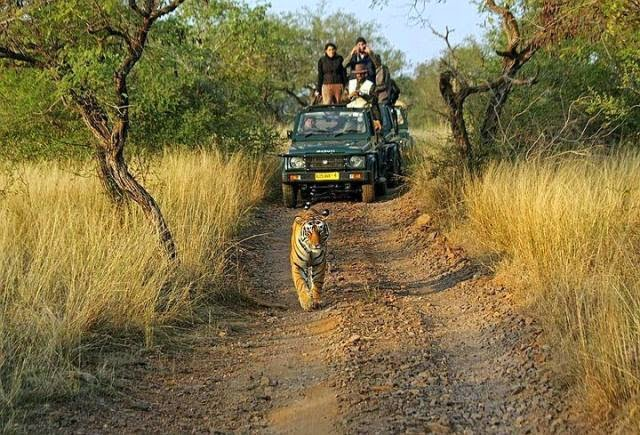 Jeep Safari, Ranthambore National Park