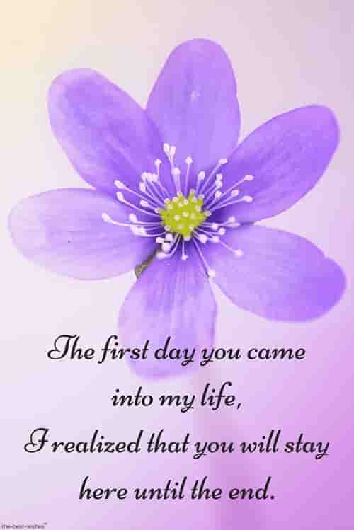 sweet love quote for him with flower