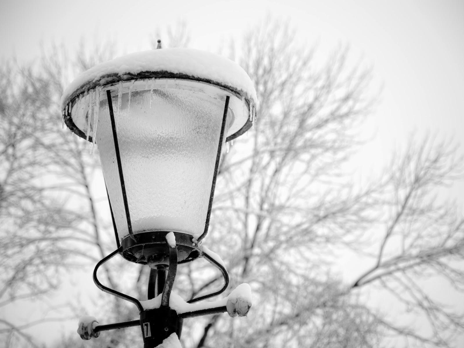 moestuin januari winter sneeuw