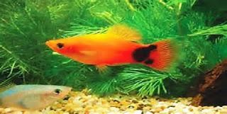 Penting!! 4 Trik Jitu Merawat Akuarium Ikan Rumah Anda