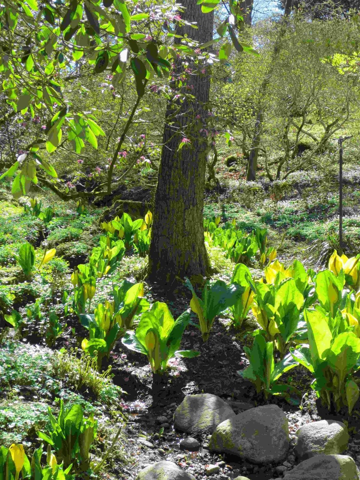 Rickardssons Rosor & Rabarber: Botaniska trädgården - inspiration ...