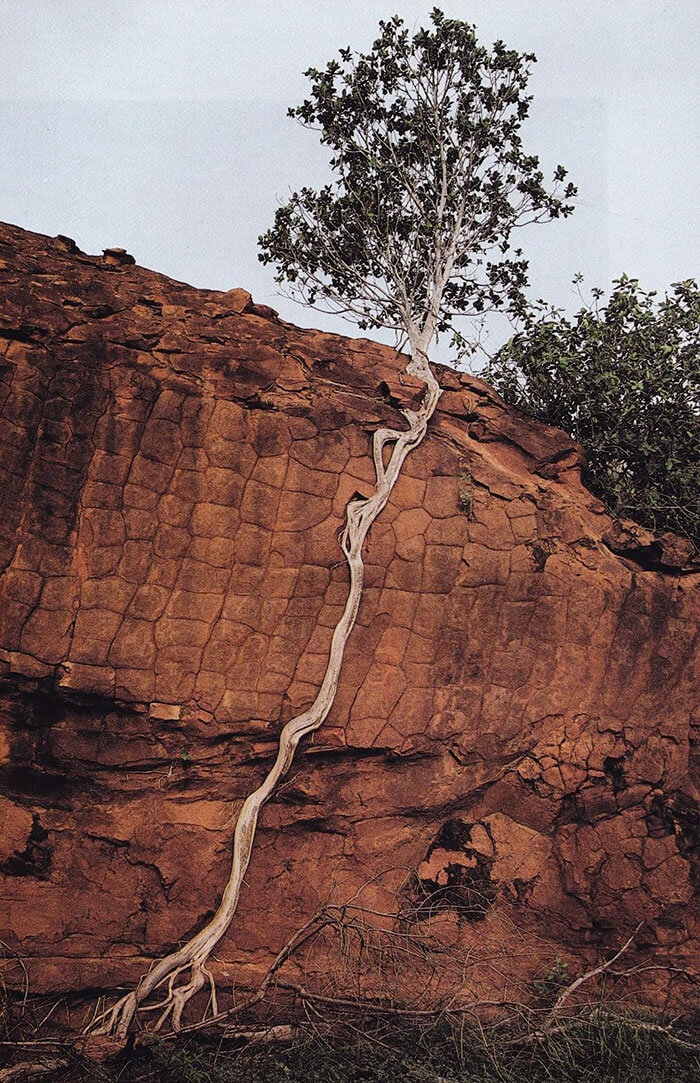 17 Pictures Of Trees That Prove The Miracle Of Life - Life Finds A Way