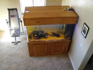 Giant Aquariums: fish tank 300 gallon acrylic aquarium   $1600 (Tucson