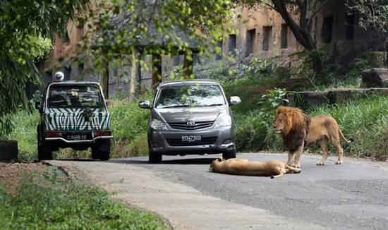 Taman safari tempat wisata edukasi di puncak bogor