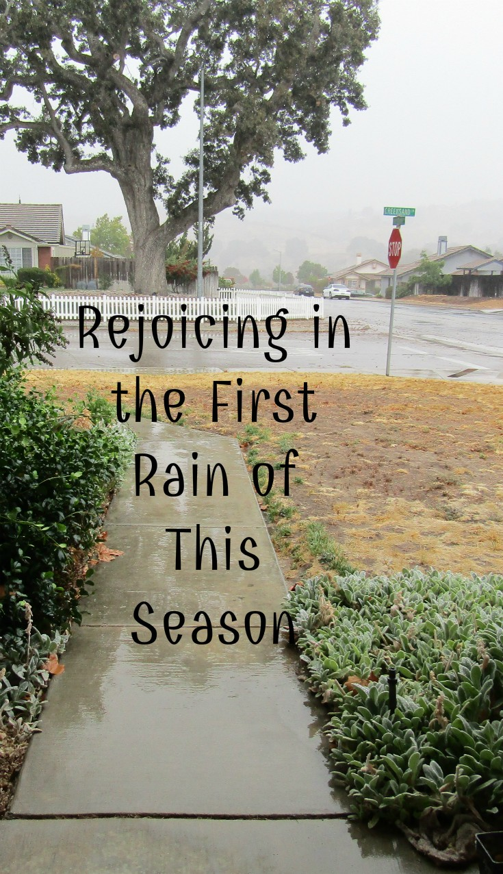 Rejoicing in the First Rain of This Season