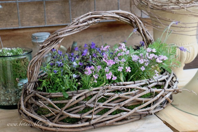 spring potting bench favorite flowers lobelia, lavender