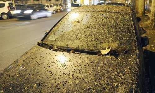 burung Emu menimbulkan jalanan kota di Australia  macet Hujan Kotoran Burung di Roma