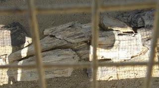 Akal wood fossil park,jaisalmer Akal wood fossil park