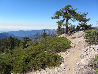 View south from the trail to Mt. Williamson