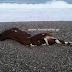 Κρήτη: Περπατούσαν στην παραλία και προσπαθούσαν να πιστέψουν αυτό που ξέβρασε η θάλασσα [pics]