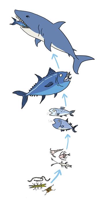 Resultado de imagen para cadena trofica marina