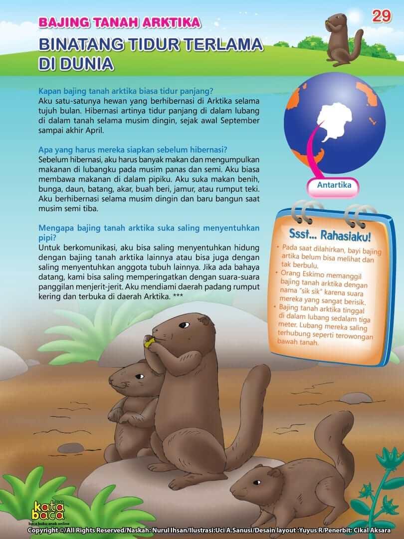 Bajing Tanah Arktika adalah Binatang Tidur Terlama di Dunia