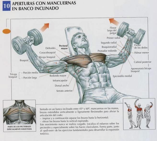 Zona Fitness Creando Músculo Rutina De Pecho Y Triceps