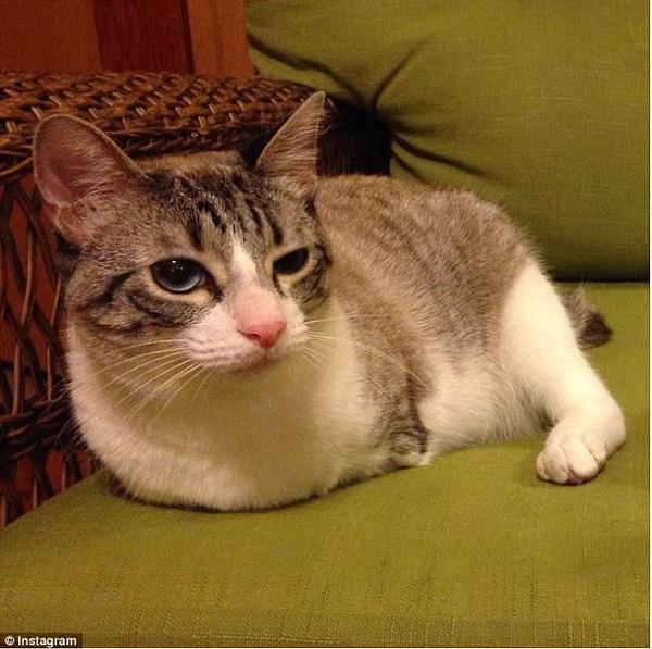 """Gặp cô mèo hai chân nổi tiếng """"phá đảo thế giới ảo"""""""