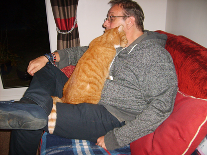 ginger cat on man's lap