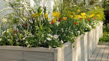 Inspiración con tulipanes en macetas, contenedores y jardineras