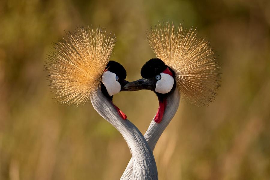 40 Beautiful Love Birds Wallpapers Inspire Information