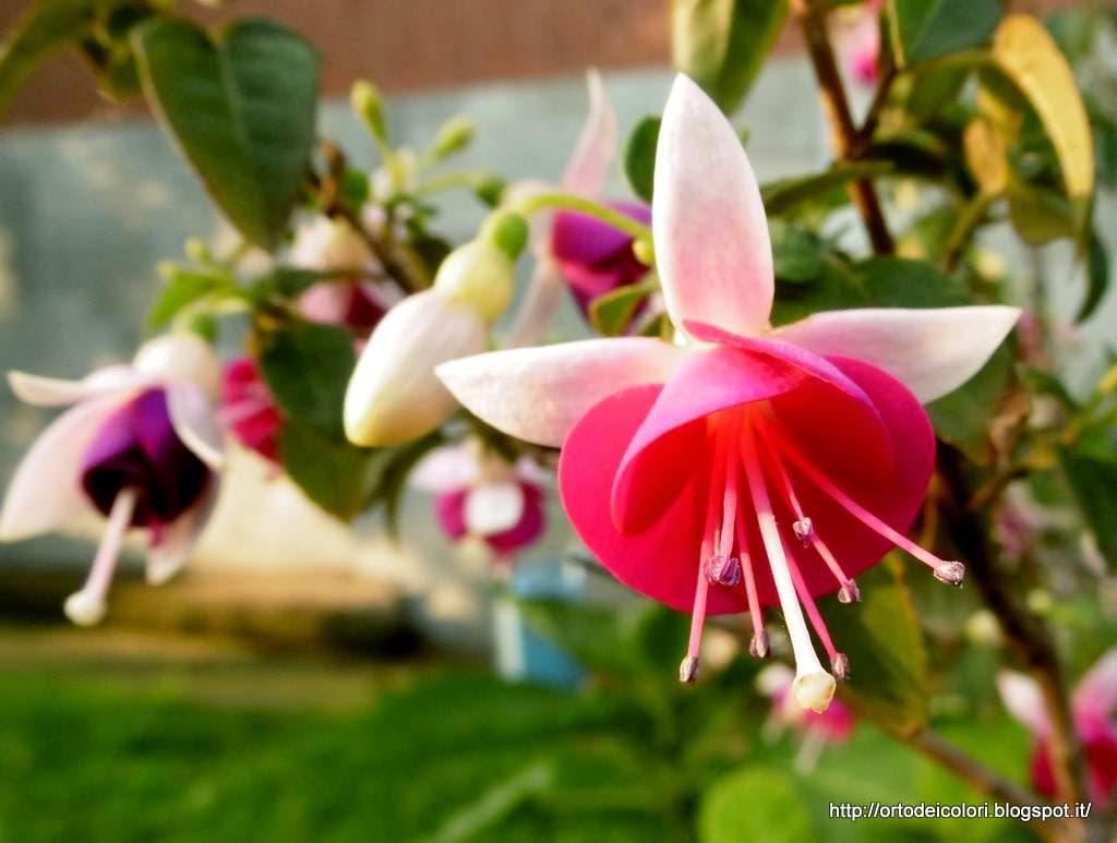 L 39 orto dei colori fiori misti di fine agosto for Fiori di agosto