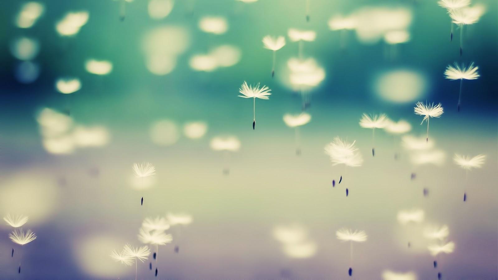Free Falling In Love Wallpaper Dandelion Flying Seeds Mystery Wallpaper