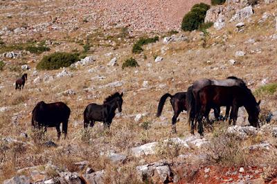 SOS για τα 3.200 άλογα της Πίνδου
