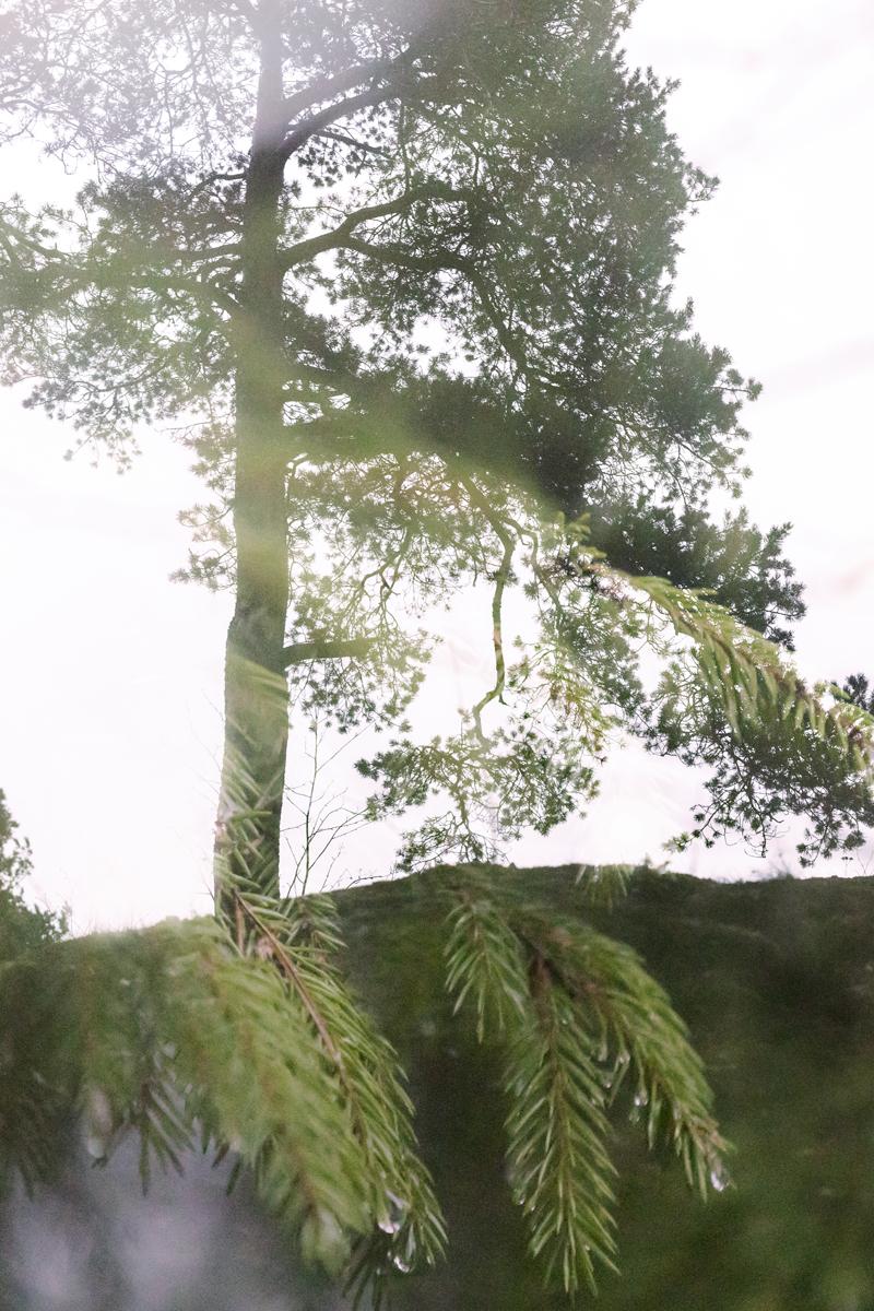 metsä, wood, nature, luonto, luontovalokuvaus, naturephotography, forest, finland, suomi, Visualaddict, valokuvaaja, Frida Steiner, päällekkäisvalotus, double exposure