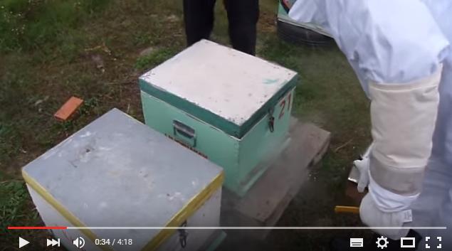 Ένωση δυο μικρών μελισσοσμηνών VIDEO