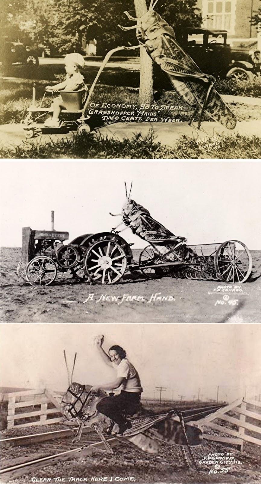 ShukerNature: THE GIANT GRASSHOPPER OF WISCONSIN ...