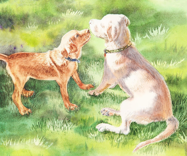 Two Yellow Labrador Puppies Playing Watercolor by Irina Sztukowski