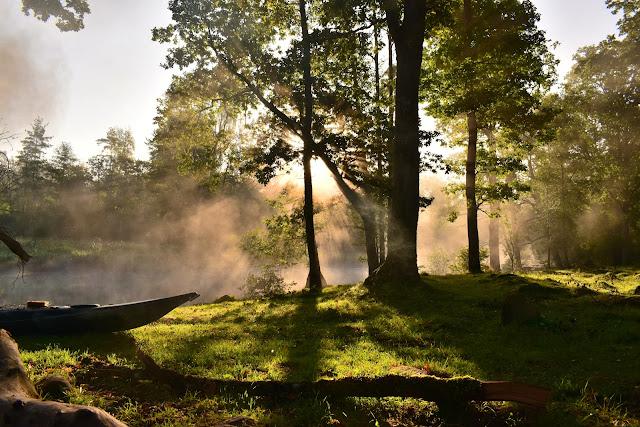 foret-arbre-nature-environnement