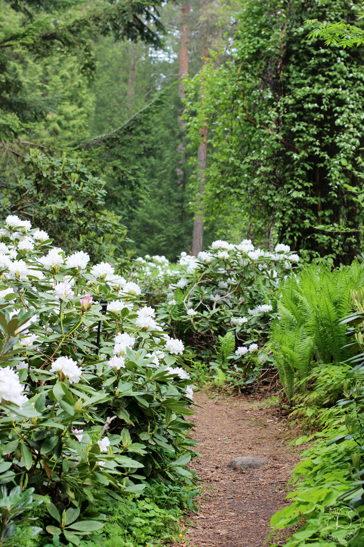 Hörtsänän Arboretum