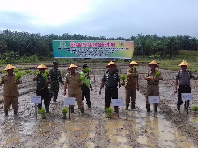 Gerakan menanam padi serentak di lahan persawahan Desa Mampang Kecamatan Kota Pinang Kabupaten Labuhanbatu Selatan, Rabu (08/02/2017