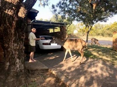 Buck at chalet at Dikholo