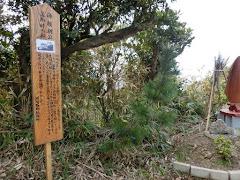 館山:洲崎神社笠掛け松