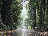 Bedah Fhoto Kebun Raya Bogor Ala Admin Blog Asik Pedia