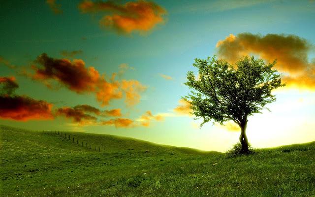 Ağaç ve Doğa