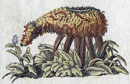 Hasil gambar untuk tanaman pemakan domba
