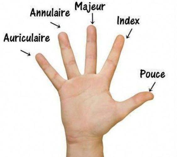 Części ciała - nazwy poszczególnych palców - Francuski przy kawie