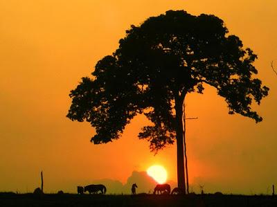 صور حيوانات غابات الامازون