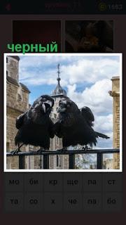две птицы черного цвета сидят на ограждении и каркают во все горло