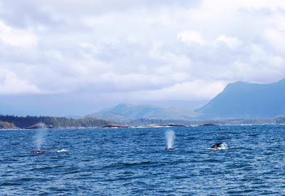 Pacific Rim Whale Festival Vancouver Island