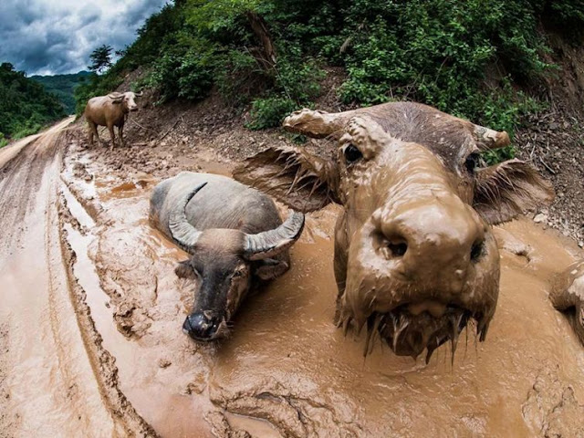 National Geographic - Best Wildlife Pictures of January 2016