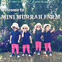 http://petite4thequadruplet.blogspot.com/2015/12/mini-murrah-farm.html