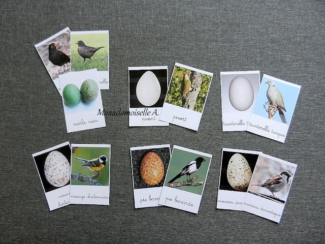 Cartes de nomenclature : Oeufs et oiseaux des jardins